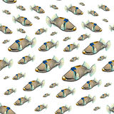 Picasso triggerfish pattern Royalty Free Stock Photography