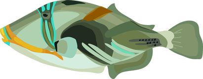 Picasso triggerfish (Rhinecanthus aculeatus) Royalty Free Stock Photos