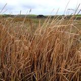 Piccanninnie accumula il parco di conservazione - canne Fotografia Stock
