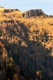 Picchi di montagna ad una luce solare luminosa calda Abeti verso il basso fotografia stock libera da diritti