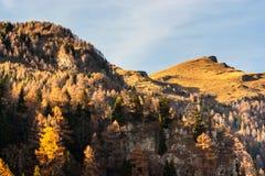 Picchi di montagna ad una luce solare luminosa calda Abeti verso il basso fotografia stock