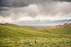 Picchi di montagna con neve nella distanza, pascoli verdi sotto il cielo nuvoloso scuro nel Kirghizistan Fotografia Stock