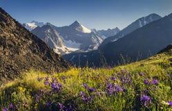 Picchi di montagna e prato alpino Fotografia Stock Libera da Diritti