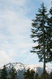 Picchi di montagna ed alberi sempreverdi Fotografia Stock