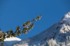 Picchi di montagne di Snowy il giorno soleggiato Sorgente l'albero sta fiorendo Immagini Stock