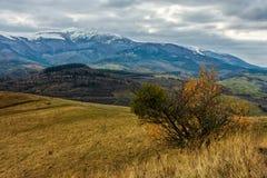 Picchi di Snowy sopra il prato Fotografie Stock