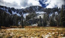Picchi dorati di Snowy e dell'erba Immagine Stock Libera da Diritti