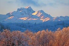 Picchi e Aspen Forest di montagna costieri alla luce solare di sera il bello giorno di inverno Immagine Stock Libera da Diritti