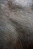 Picchiettii della pelle Fotografia Stock