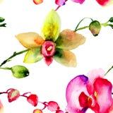 Picchiettio senza cuciture con i fiori delle orchidee Fotografia Stock Libera da Diritti
