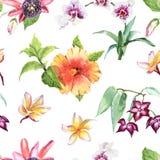 Picchiettio senza cuciture dei fiori tropicali botanici acquerelli dell'illustrazione Fotografie Stock Libere da Diritti