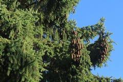 Picchio in un albero Fotografia Stock