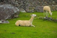 Picchu de Machu, Pérou Image libre de droits