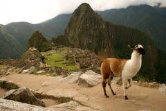 Picchu van Machu Royalty-vrije Stock Foto's