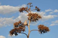 Piccione in albero Immagini Stock Libere da Diritti