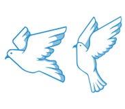 Piccione bianco blu royalty illustrazione gratis