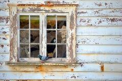 Piccione in finestra Fotografie Stock Libere da Diritti