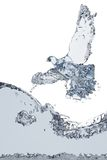 Piccione di acqua Fotografie Stock