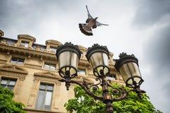 Piccione di volo e lanterna dell'annata a Parigi, Francia Fotografia Stock Libera da Diritti
