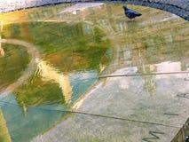 Piccione nella fontana Fotografie Stock