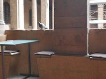 Piccione romano del caffè Immagine Stock