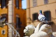 Piccione su fontain a Roma Fotografia Stock