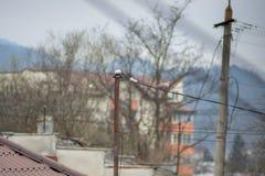 Piccione su un cavo di elettricità Fotografia Stock Libera da Diritti