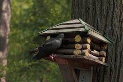 Piccione vicino all'alimentatore dell'uccello su un fondo vago immagini stock libere da diritti