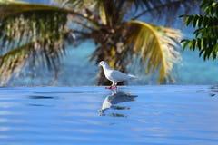 Piccione vicino allo stagno nei tropici che vive su una palma immagini stock libere da diritti