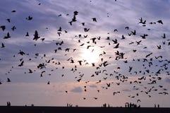 piccioni Immagine Stock Libera da Diritti