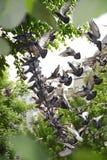 Piccioni che volano da un cavo Fotografie Stock Libere da Diritti