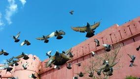 Piccioni che volano fuori della parete forte Fotografia Stock