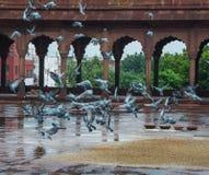 Piccioni che volano negli arché della tomba di Humayun, a Delhi, l'India immagini stock libere da diritti