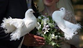 Piccioni di cerimonia nuziale Immagine Stock