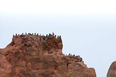 Piccioni distanti su una roccia rossa Fotografie Stock