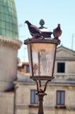 Piccioni in e fuori una lampada Fotografie Stock Libere da Diritti