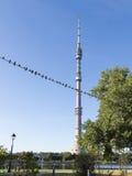 Piccioni e torre di Ostankino TV Fotografia Stock Libera da Diritti