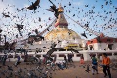 Piccioni intorno a Boudhanath Stupa Fotografia Stock Libera da Diritti