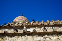 Piccioni nel colore bianco, nero e grigio sulle mattonelle di tetto di terracotta di vecchia piccola chiesa classica in parete di Immagine Stock