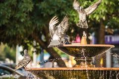 Piccioni nella fontana della città Immagini Stock Libere da Diritti