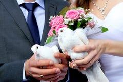 Piccioni su tradizione di nozze Immagine Stock