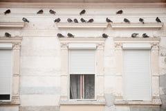 Piccioni su una facciata della costruzione Fotografia Stock
