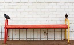 Piccioni sul banco Fotografie Stock