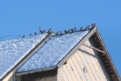 Piccioni sul tetto Fotografia Stock Libera da Diritti
