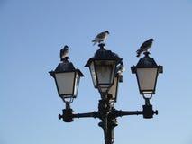 Piccioni sulla lampada di via Fotografia Stock