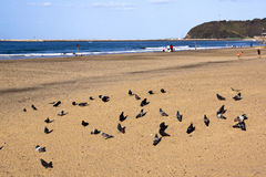 Piccioni sulla spiaggia del Addington di Durban con i pescatori nel fondo Fotografie Stock