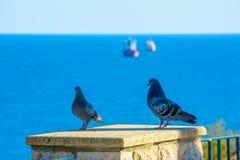 Piccioni a Tarragona (Spagna) Fotografia Stock Libera da Diritti