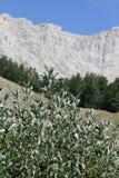 Picco di Bure in alpi, Francia Fotografia Stock Libera da Diritti