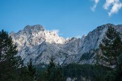 Picco di montagna alpino su cielo blu e foresta in priorità alta Fotografia Stock Libera da Diritti