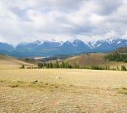 Picco di montagna dello Snowy Fotografia Stock